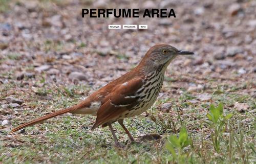 perfume-area-website-52d90d5771c14c5747d16c836927e55d