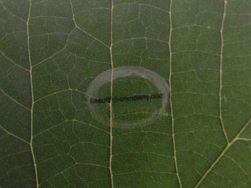 sticker-leaf2-4f97ffafa3803b5c2c45099bc80eb73f